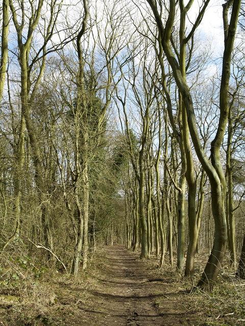 Dale Plantation Woodland