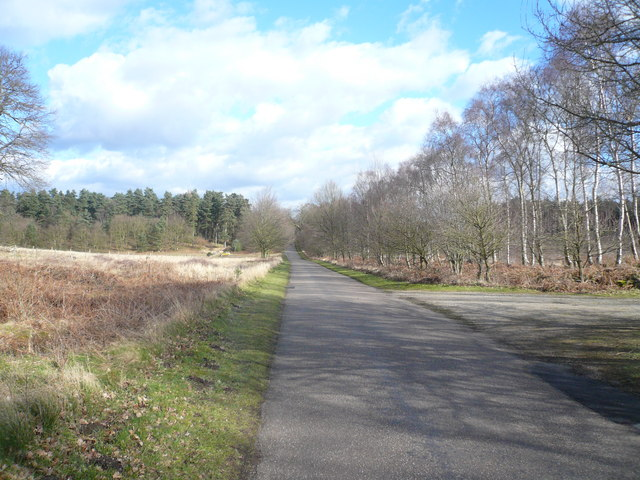 Clumber Park - Road View