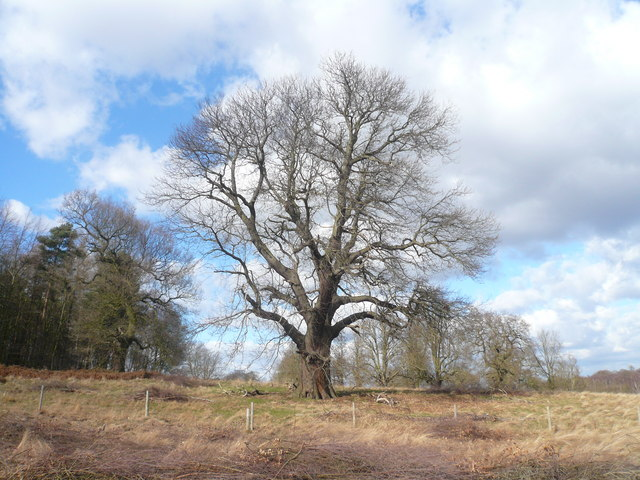 Clumber Park - Tree View