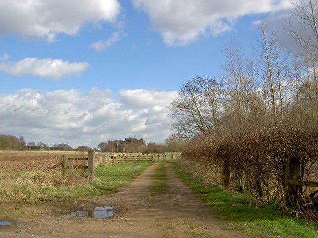 Track to grazing sheep near Budby