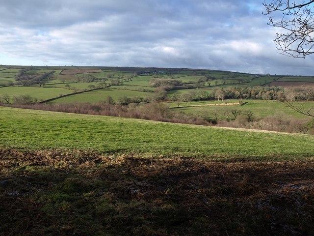 Field on Tregeare Down