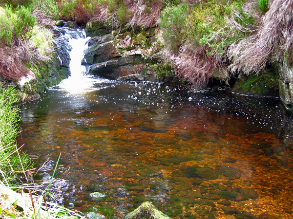 Pool in the Burn of Glendui