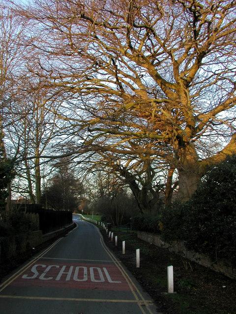 Ivy Lane at Dawn