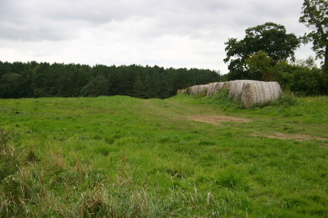 Hay bales near Runt's wood
