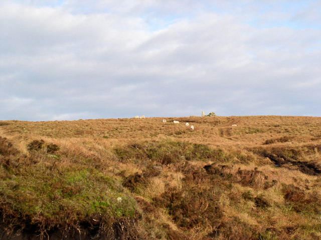 Sheep on Beneraird
