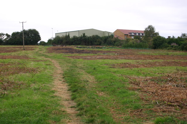 Cleared allotment patch