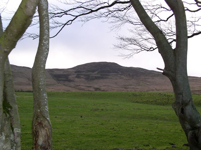 Pasture above Auchencrosh Trail