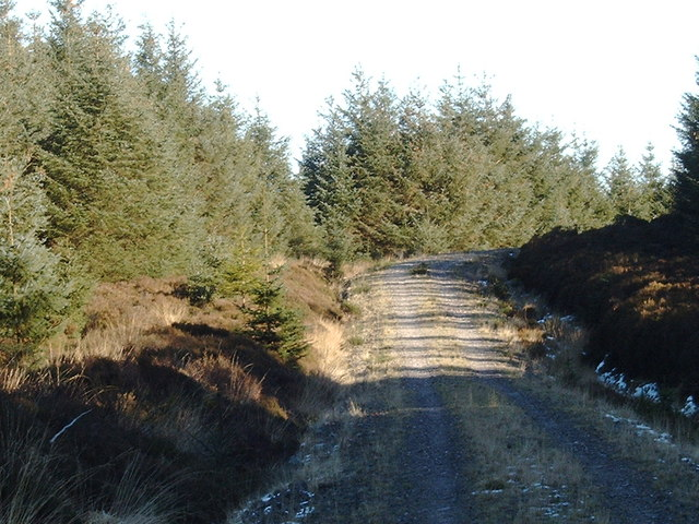 Forestry road near Hayfield Knowe