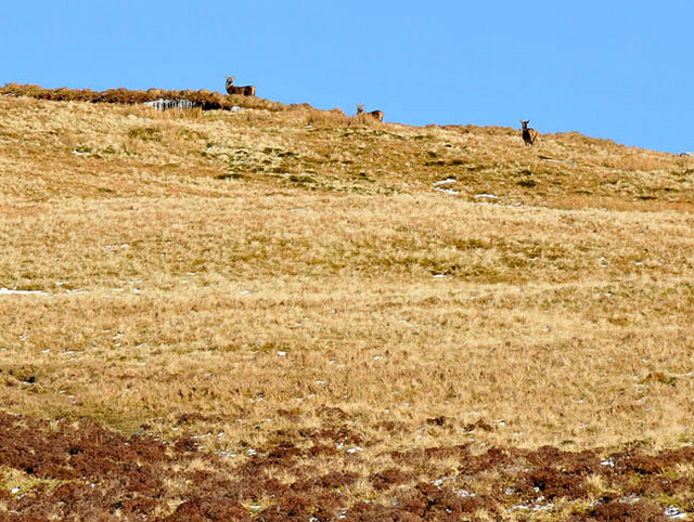 Deer on the slopes of Sron Mhor