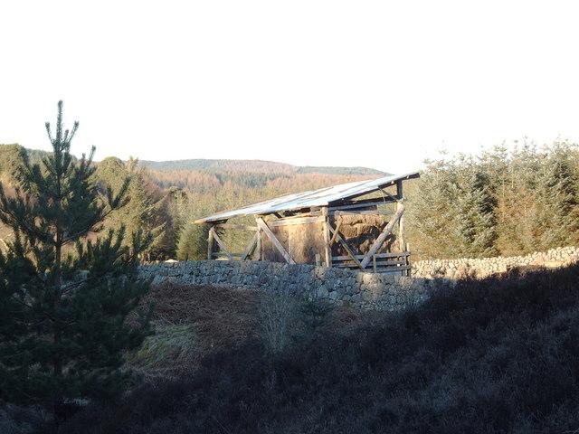 Hay Shelter