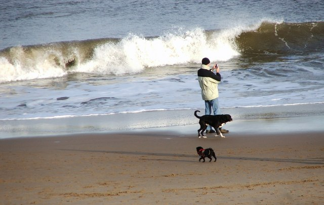 Waves and Dogs