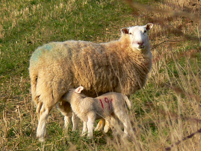 Mother and children, south of Eastington
