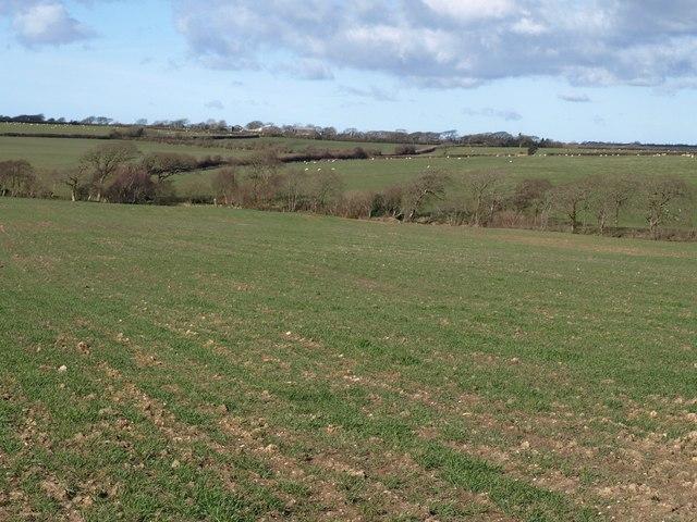 Fields near Exe