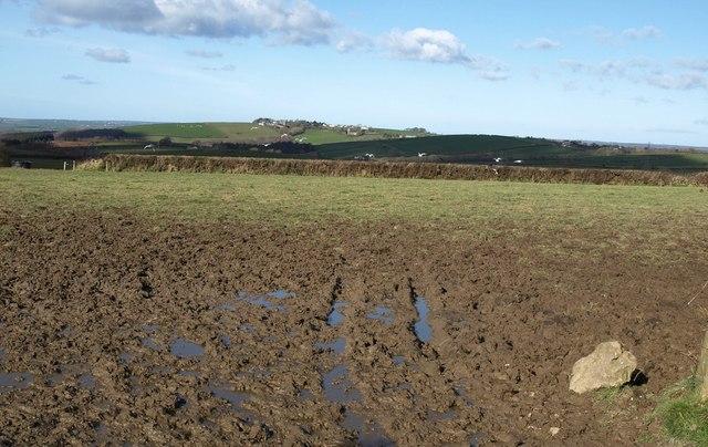 Field on Greena Moor