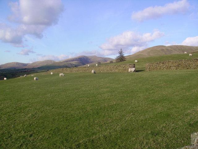 Sheep, Winder