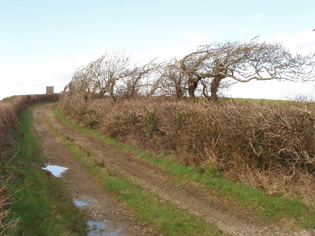 Wind-bent trees on track to Thinwood