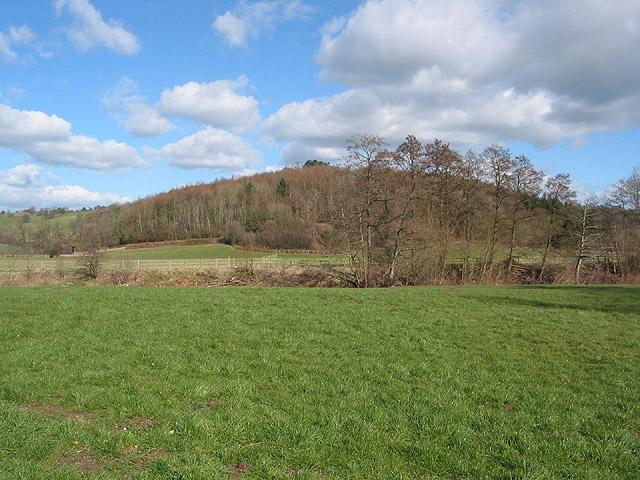 Edge of the woodland NE of Skenfrith Castle