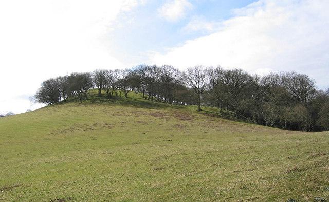 Wooded hill near Whitebanks