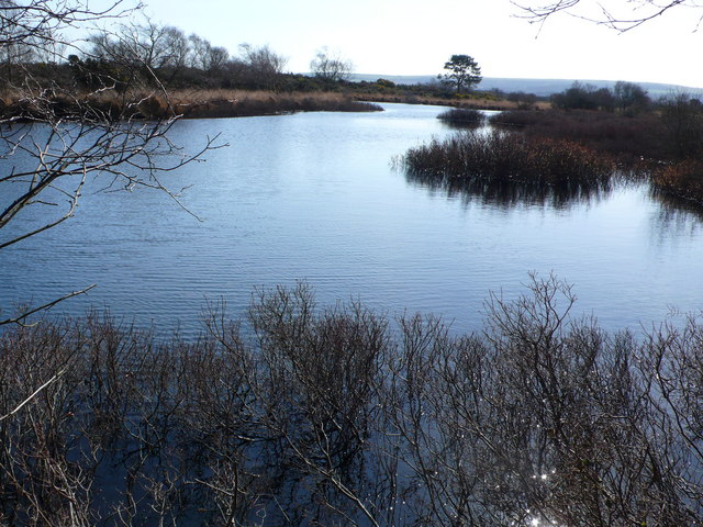 Studland Bay Nature Reserve