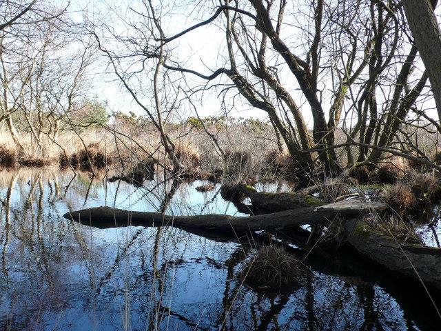 Studland Heath marsh lake