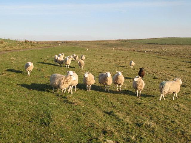 Pastures near Low Tipalt