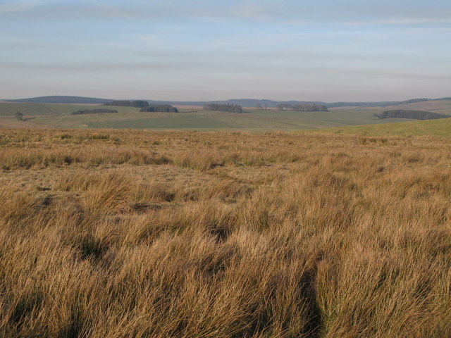 Rough pastures west of Bundle Hill (2)