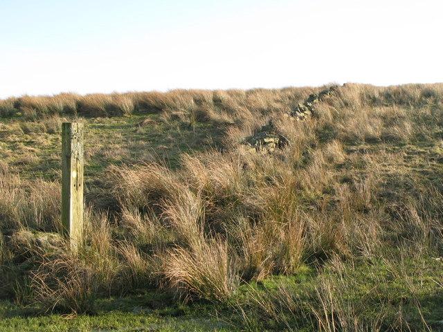 Ruined dry stone wall near Bundle Hill