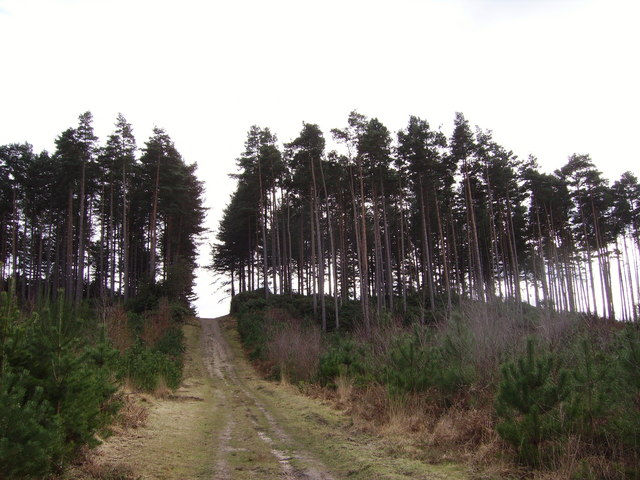 Wagbullock Hill in Swinley Forest