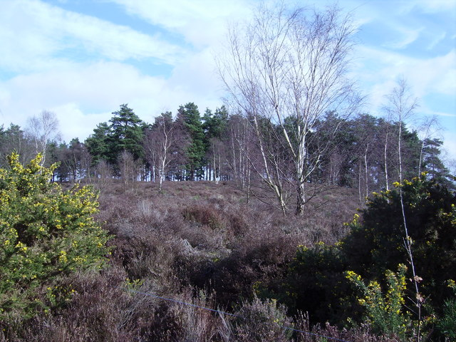 Heathland at Crooksbury Common