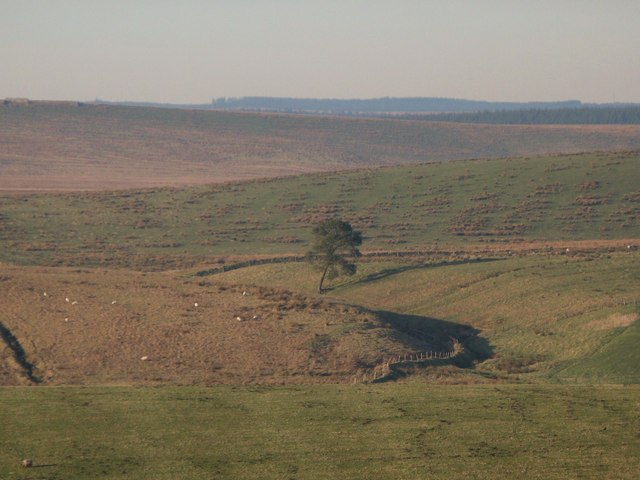 Lone tree east of High Tipalt