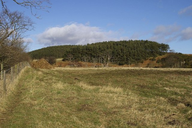 Gathercauld Wood