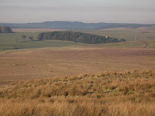 Pastures west of Benks Hills