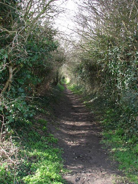 Shaded bridleway