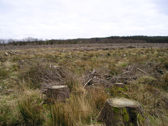 Clear-felled Norway Spruce