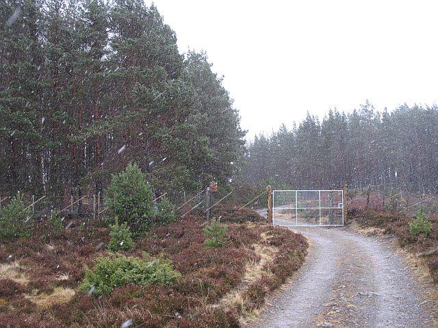 Forest edge, Drumguish