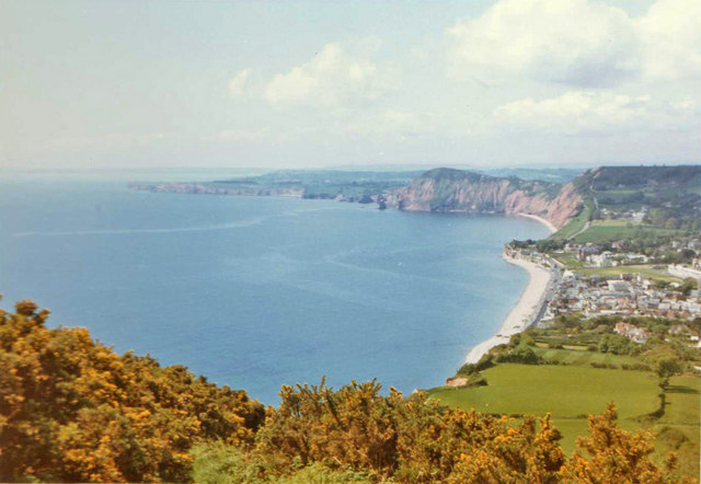 Gorse on Salcombe Hill with Sidmouth and coastline, Devon