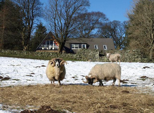 Mid Linthills, Lochwinnoch