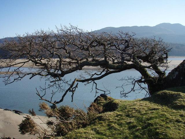 Knarly old tree