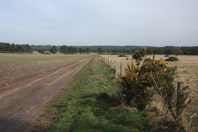 Bridleway to Lakenheath Warren