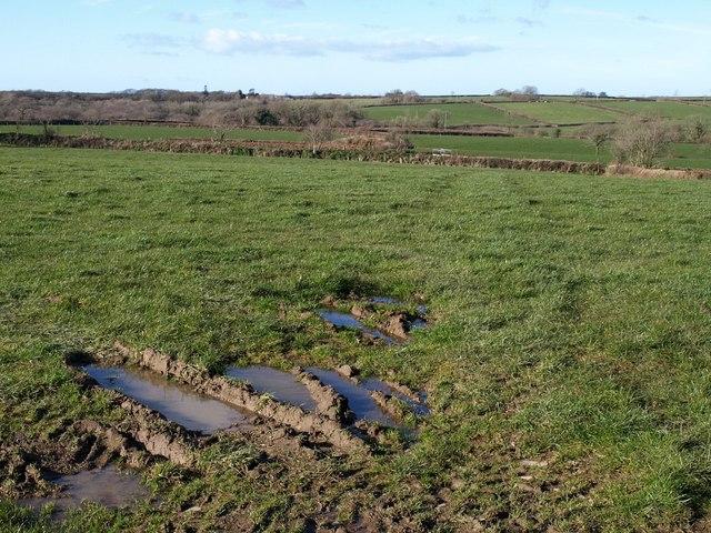 Field at Monks Farm