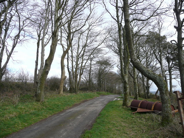 Beeches by the T junction