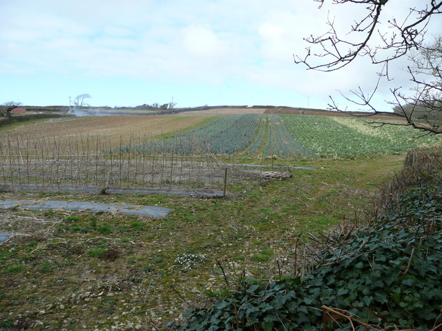 Vegetable-growing land