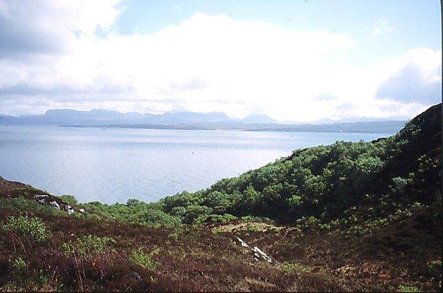 Woods, east coast of Rona