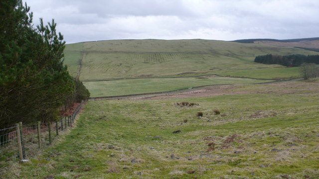 Bennan Hill Forestry