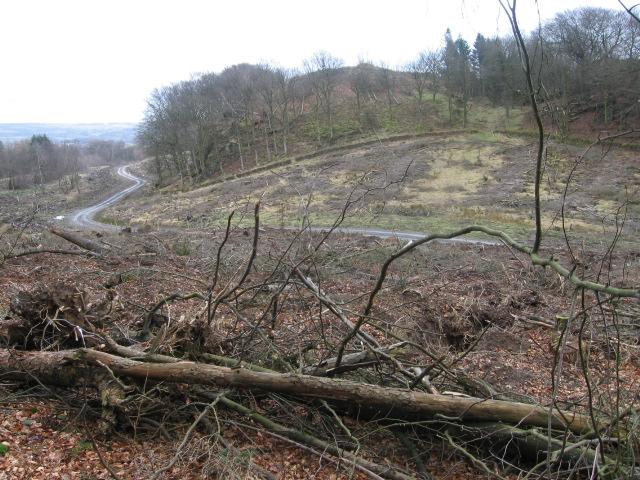 Barhill Wood