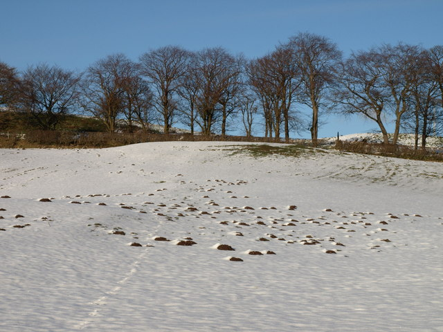 Winter Mole Hills