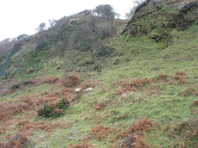 Feral goats grazing on the cliffs above Porth y Nant beach