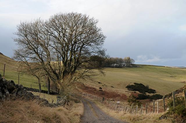Tree beside the Track to Craigfarg