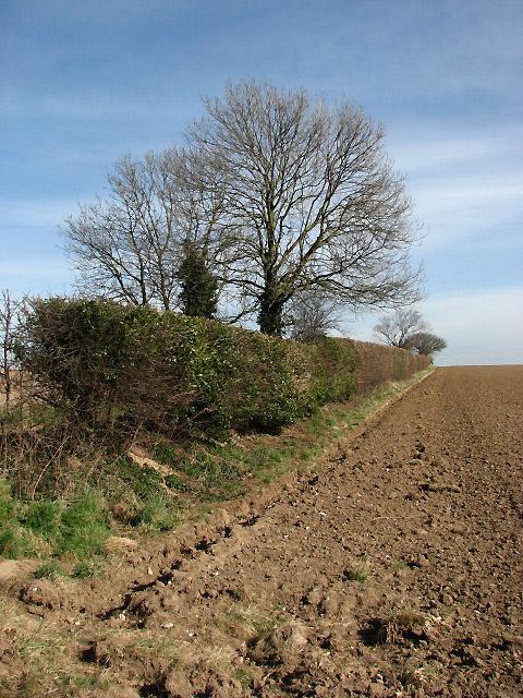 A field boundary hedge