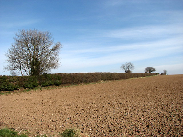 Hedgerow separating fields